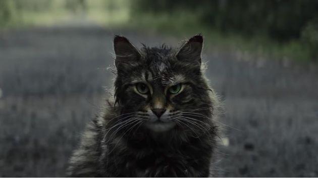 Ele não é mais cinza como no filme original, mas o gato Church do novo Cemitério...