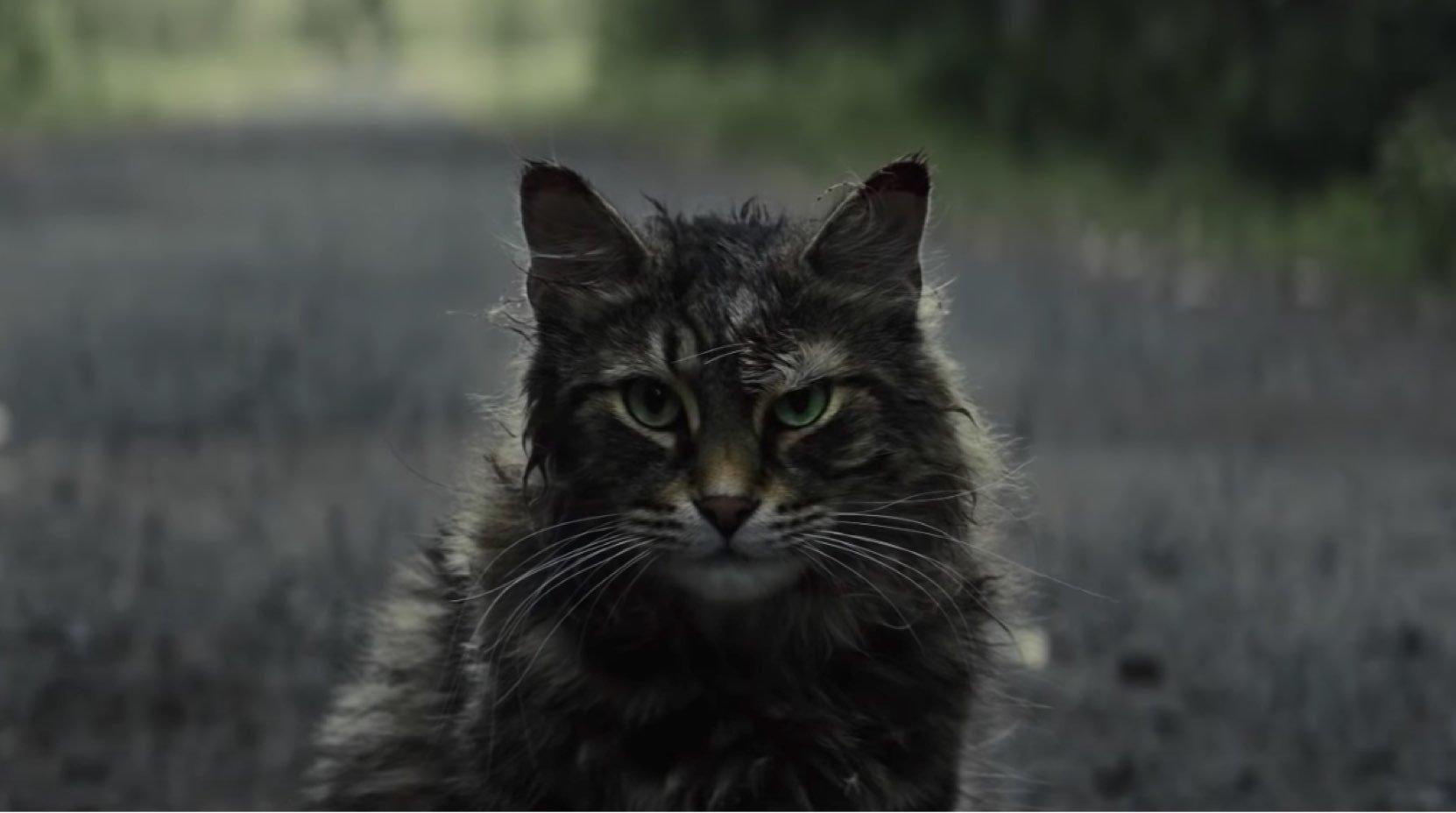 Lembra do Curch? O sinistro gato de 'Cemitério Maldito' está de
