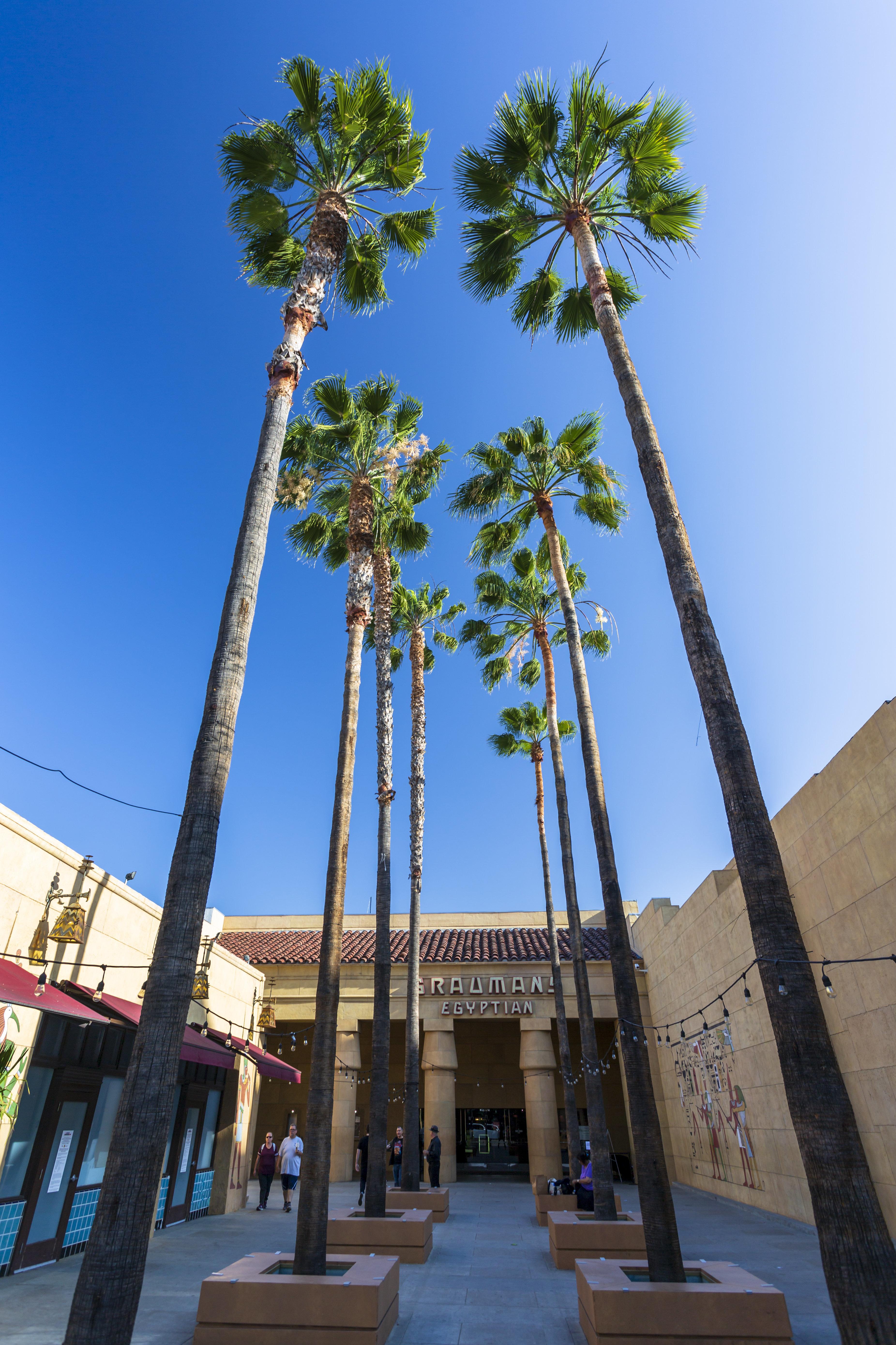 Netflix veut racheter l'Egyptian Theatre de Los