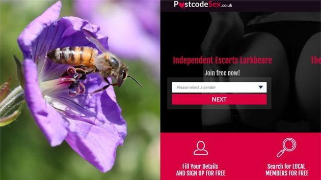 The Government's Bee Advice Website Has Been Linking To An Escort