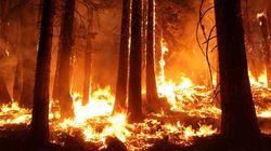 Au Maroc, 841 hectares ont été ravagés par des feux de forêts en