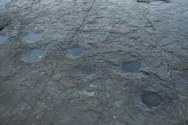 Νότια Κορέα: Ανακαλύφθηκε δέρμα δεινόσαυρου σε άριστη