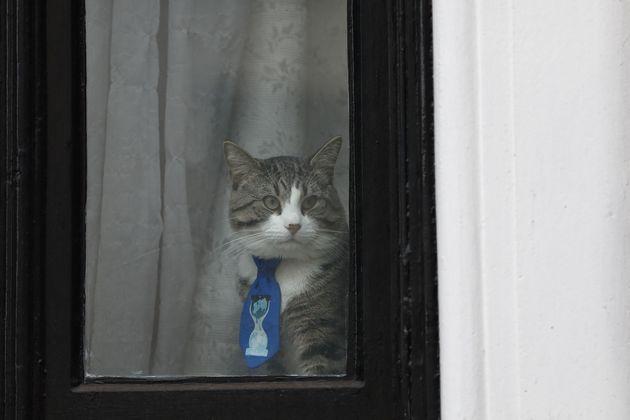«Ο γάτος του Ασάνζ είναι