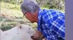 Νότια Αφρική: Χάιδεψε λέαινα και πάρα λίγο να χάσει το χέρι