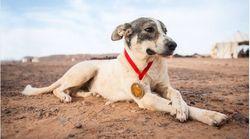 Cactus le chien, star improbable du Marathon des sables