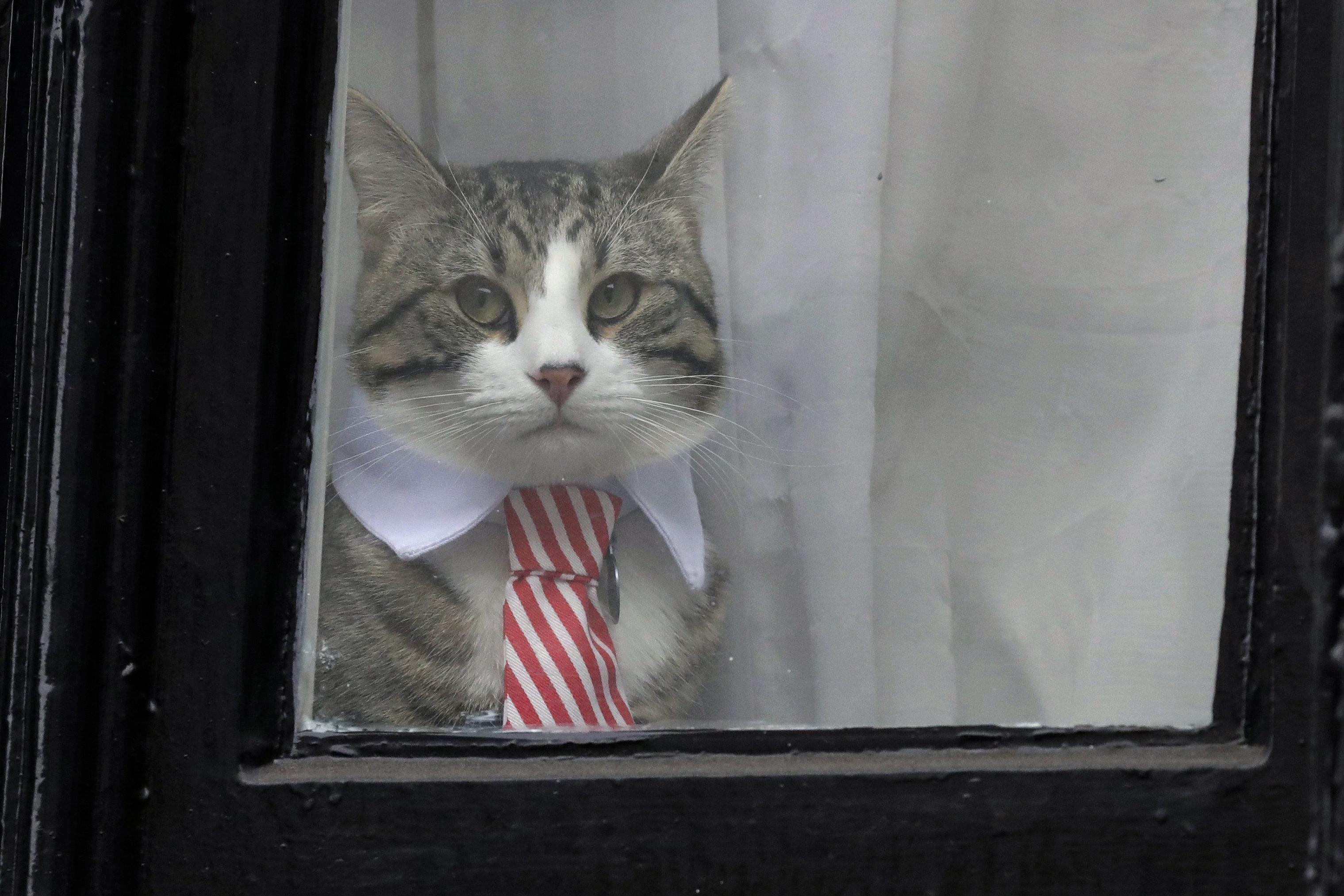 Julian Assange's Cat is Safe