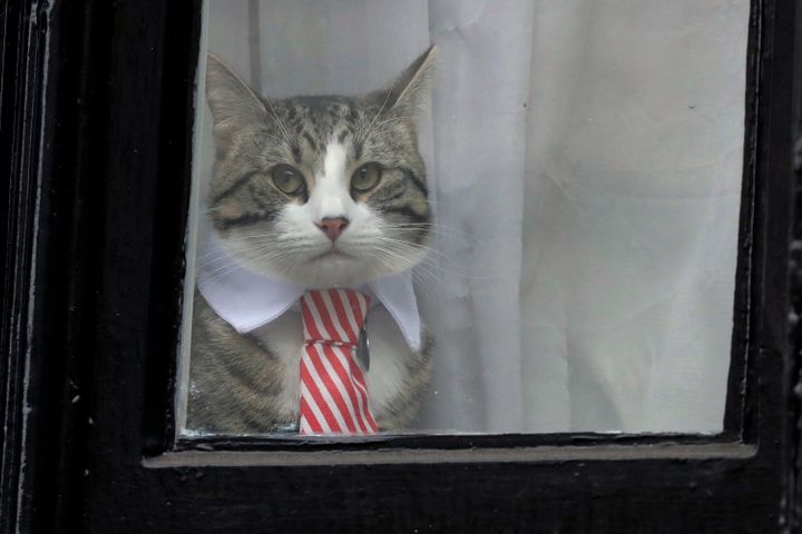 Julian Assange's cat, seen at a window of the Ecuadorian Embassy in London in 2016.