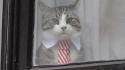 Julian Assange's 'Embassy Cat' Is Safe, WikiLeaks