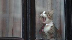 위키리크스가 '어산지 고양이'의 근황을