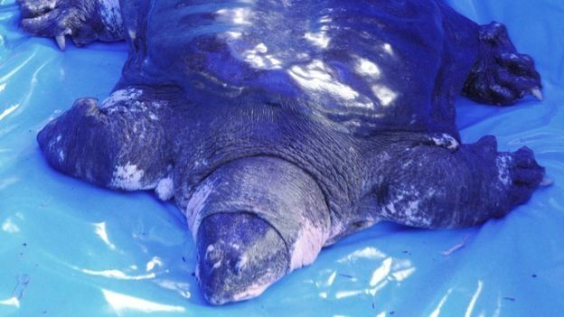 Πέθανε μία από τις πιο σπάνιες χελώνες του