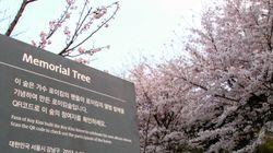 서울 강남 한가운데 '로이킴 숲' 존폐 논란이 일고