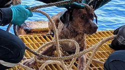 Ταϊλάνδη: Έσωσαν σκυλάκι που είχε χαθεί στην θάλασσα - Κανείς δεν ξέρει πως βρέθηκε