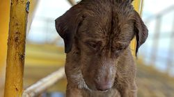 Rescuers Save Dog Found Swimming 135 miles Off