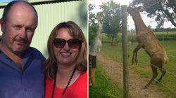 Αυστραλία: Τον σκότωσε το ελάφι που είχε στην αυλή του σπιτιού
