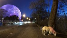 There Is No Mysterious Pink Pony Roaming Around An Island In Montreal [UPDATE]