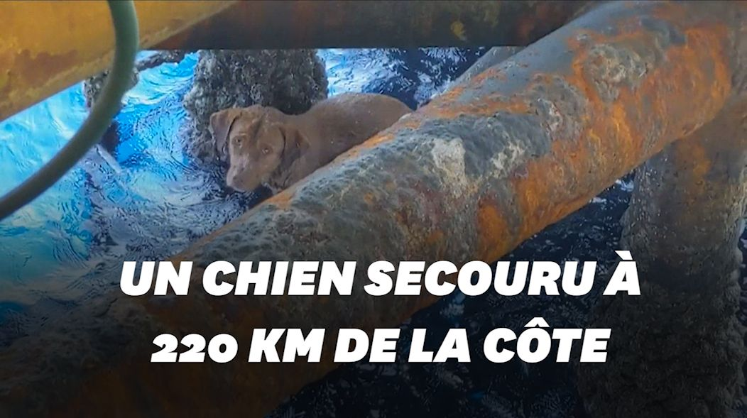 Un chien secouru à 220km de la
