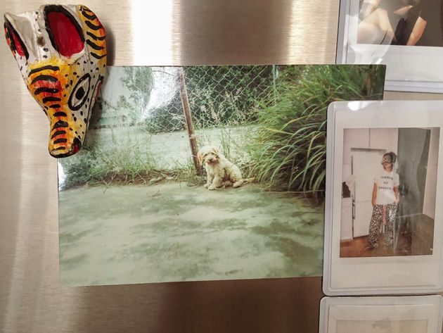 A photo of Pancho that I keep on my fridge to remind me of my first