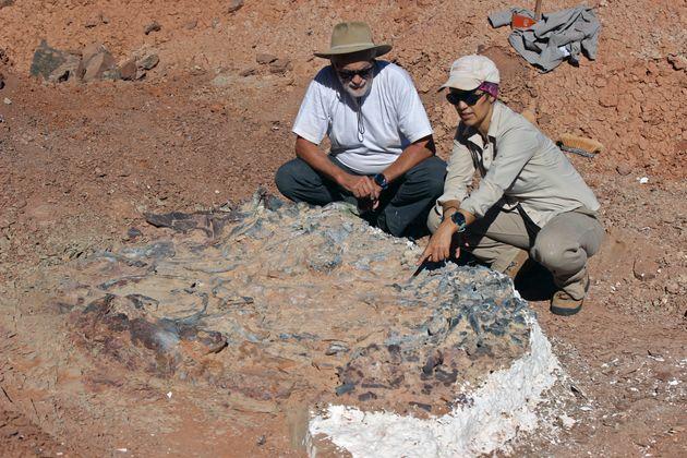 Ce cimetière pourrait permettre de découvrir les ossements de nouvelles espèces...