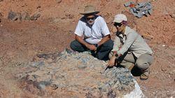 Un étrange cimetière de dinosaures découvert en