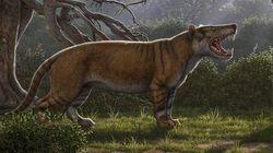 Ce félin découvert au Kenya était sept fois plus gros qu'un