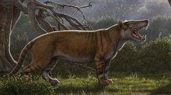 Κένυα: Απολιθώματα προϊστορικού λιονταριού σε συρτάρια