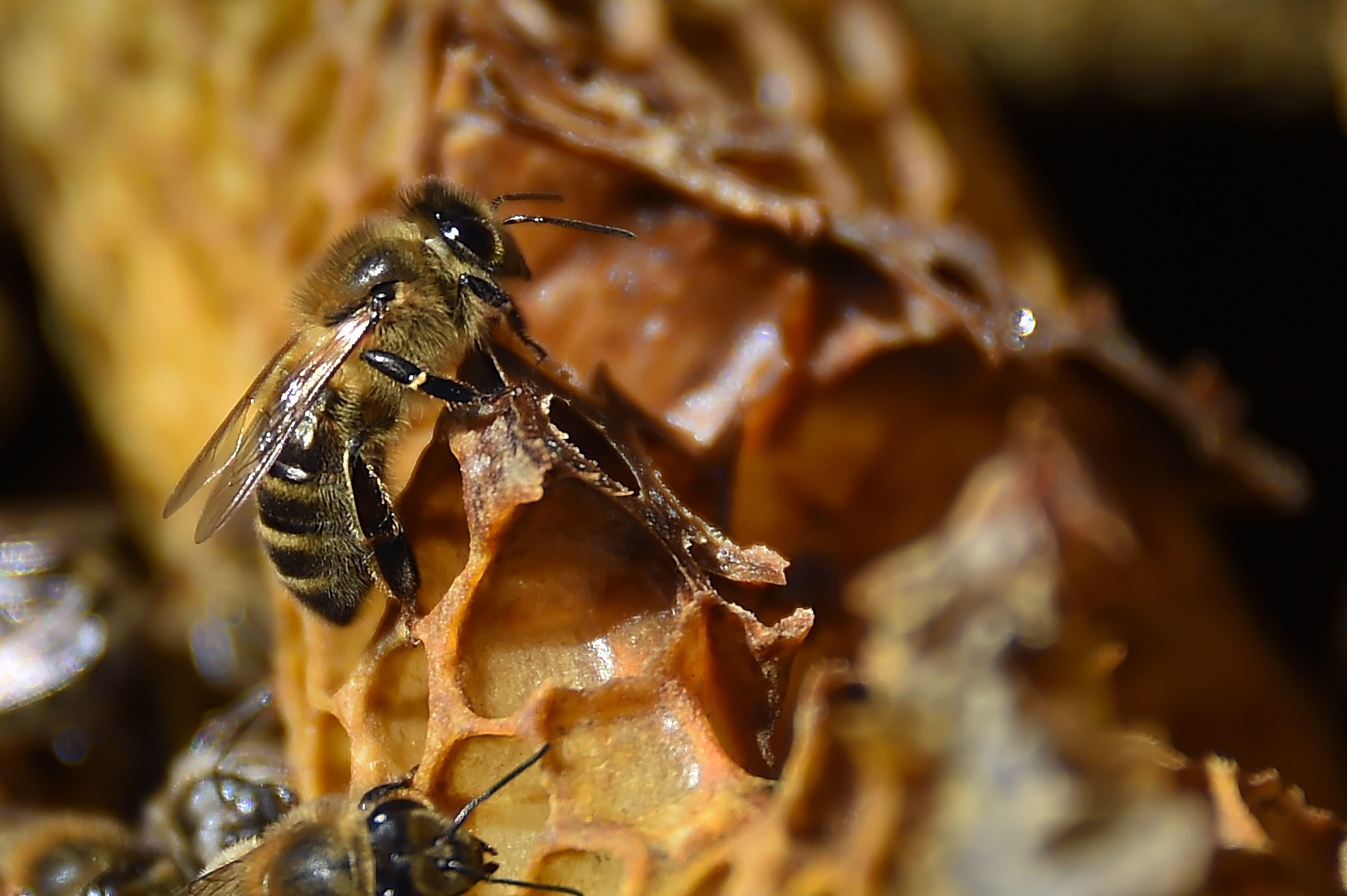Les abeilles de la cathédrale Notre-Dame ont été