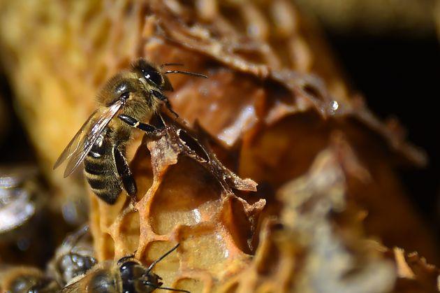 Notre-Dame: les abeilles des ruches de la cathédrale sauvées (Photo d'illustration prise...