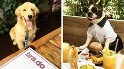 Os 5 restaurantes mais 'pet-friendly' da Restaurant Week São