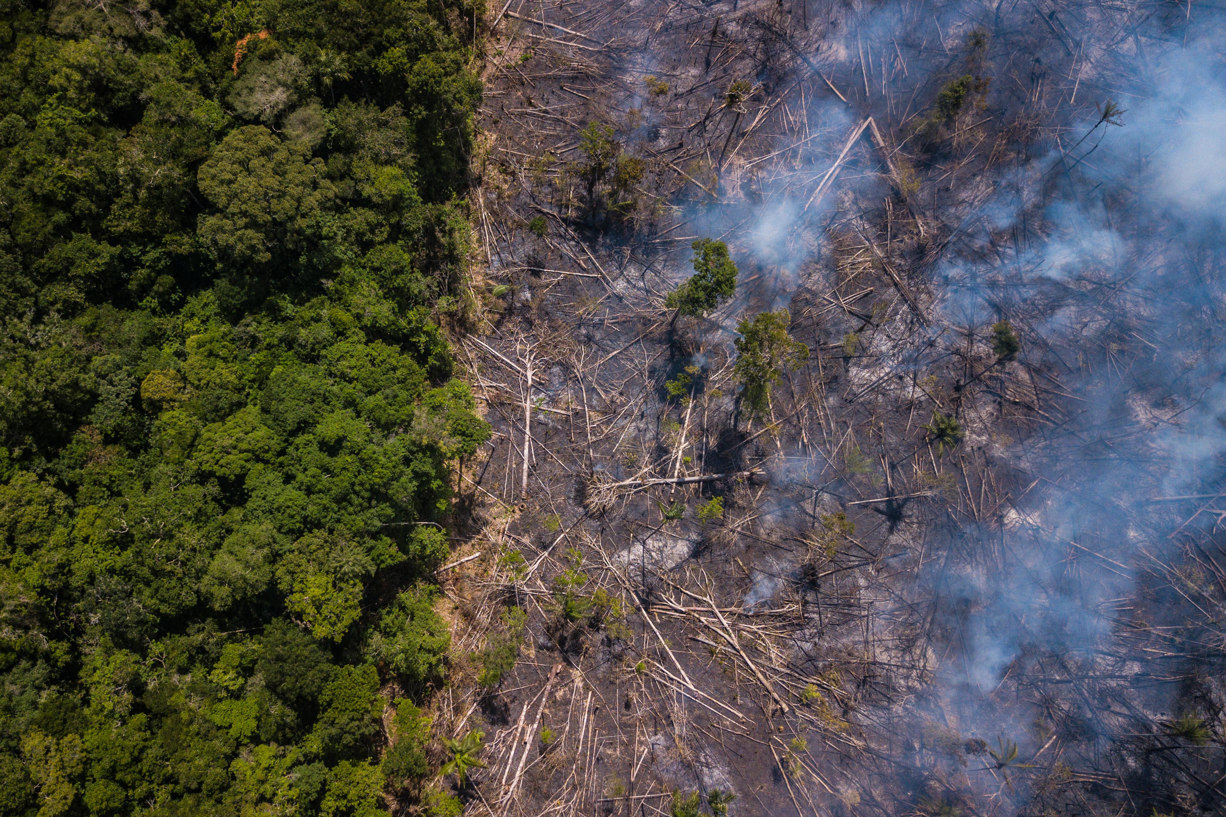 Decisões do governo Bolsonaro mostram que crime ambiental compensa, dizem