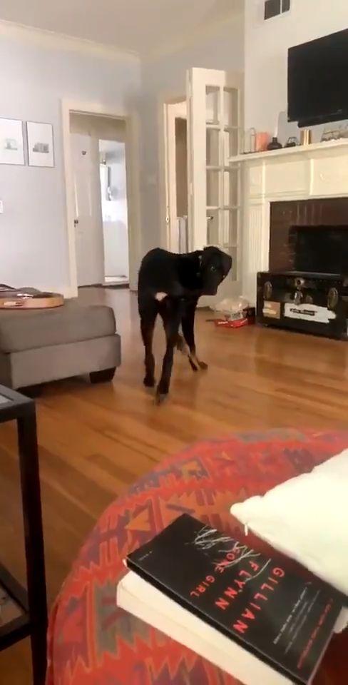 Ce chien a enfin réussi à attraper sa queue... et en est tout