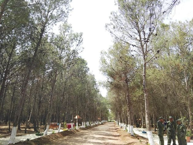 La Tunisie se dote de sa première forêt