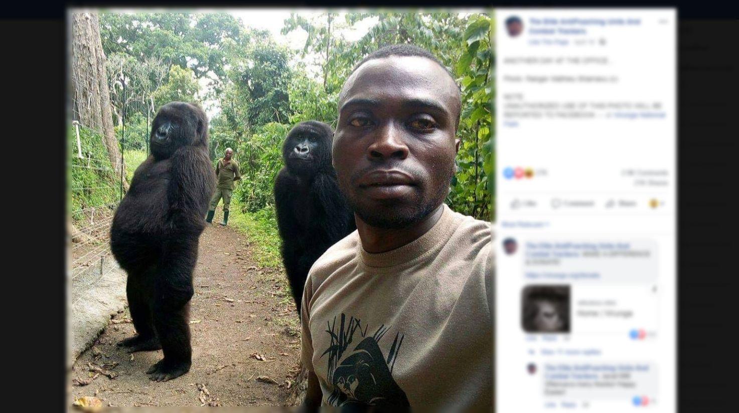 Le selfie de ces gorilles avec un ranger cache une dure