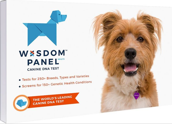 Which dog DNA test kit is best? We tried two — Wisdom Panel and Embark — to find out.