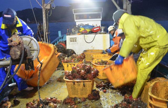 WTO判決「日本産食品は安全」の記載なかった 政府の説明と乖離