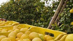 Un limone al giorno toglie il calcolo di