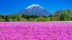 10連休に行きたい!関東甲信の絶景フラワースポット