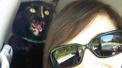 Quando il gatto reinventa la foto: gli amici felini