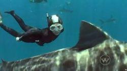 Lo squalo bianco? A lei non fa paura (FOTO,