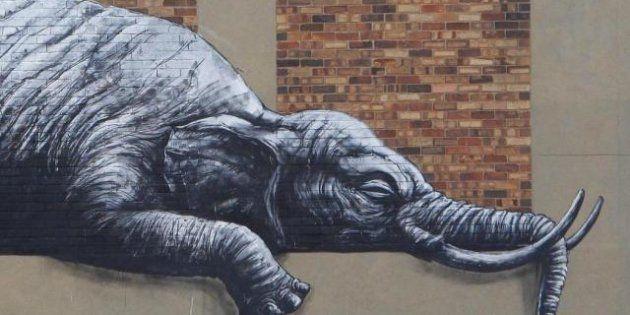 Street art: animali africani sui muri di Johannesburg. Roa esibisce i suoi nuovi murales (FOTO,