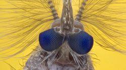 Embrioni di pipistrello e lingue di farfalla, tutte le meraviglie del mondo micro