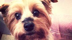 Animali: le dieci buone notizie del 2012