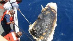 Balene morte per la Deepwater Horizon: le immagini vietate dal governo Usa (FOTO,