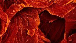Questo è un pomodoro. I cibi al microscopio negli scatti di Caren Alpert