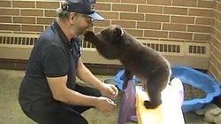 Il baby-orso a lezione di scivolo