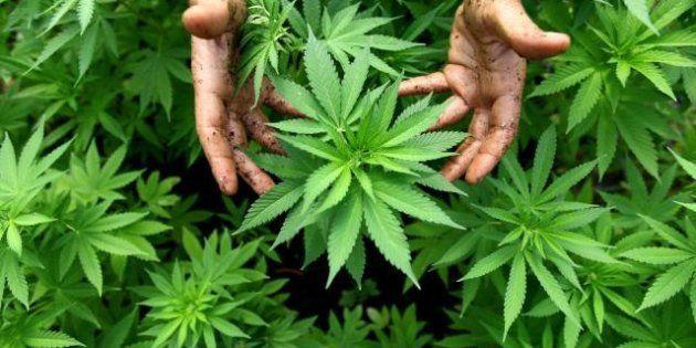 M5s: uscita dall'euro e cannabis legalizzata, ecco le prime proposte di legge dei 5 stelle