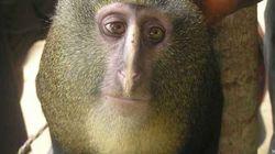 La top ten delle specie scoperte nel 2012