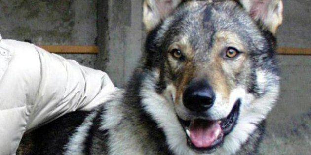 Il lupo e' diventato cane grazie alla
