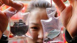 Animali come gadget: in Cina li vendono in sacchetti di plastica
