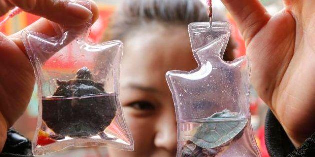 Cina: animali venduti come dei gadget in sacchetti di plastica