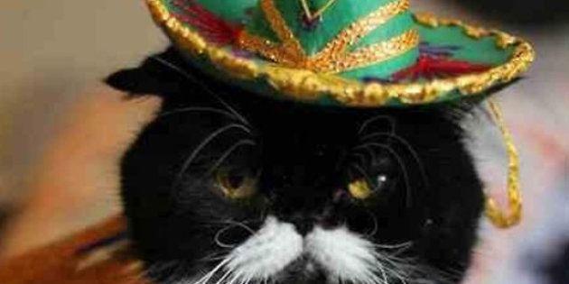Animali: anche i gatti hanno i loro momenti difficili, che fatica rapportarsi con gli umani...